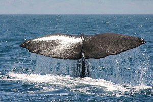 whale-watch-kaikoura